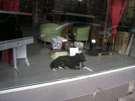 Toulousedog