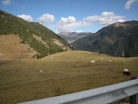 Cowsandorra