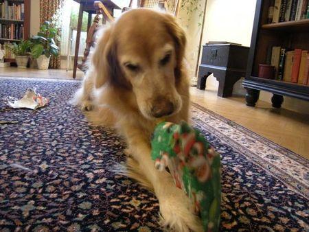 Dogpresent