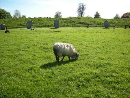 Sheepbarrow