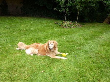 Croquetdog