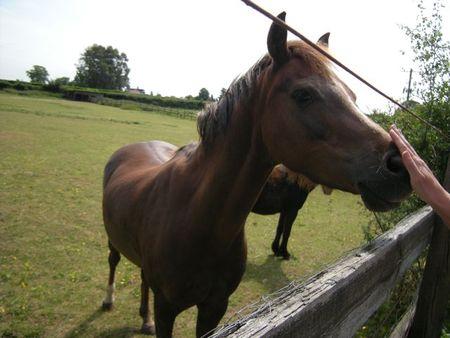 Horsebourneend