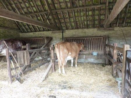 Cowsbarn