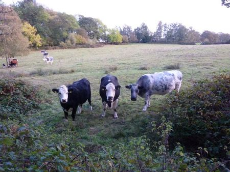 Cowspasture