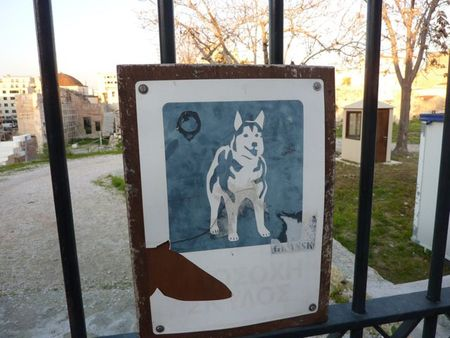 Dog11
