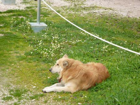 Dog16