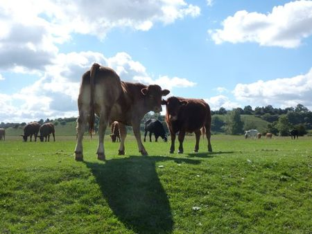 Cowsbourneend