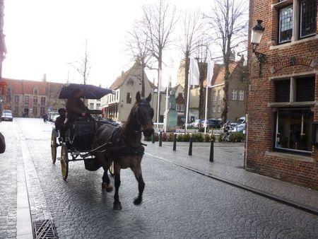 Brugeshorse2