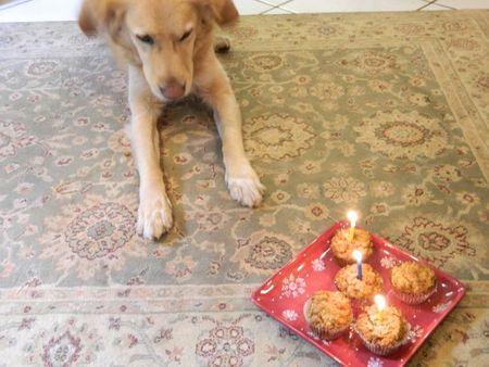 Dogbirthdaycakes