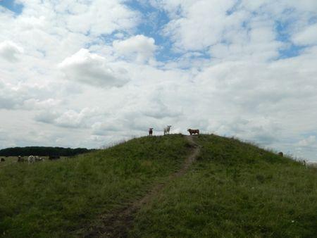 Moundcows2