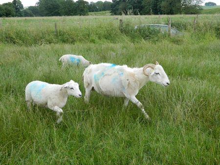 Sheepavebury
