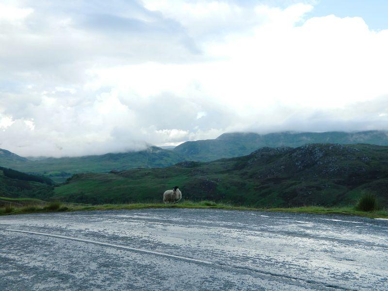 Highlandsheepview