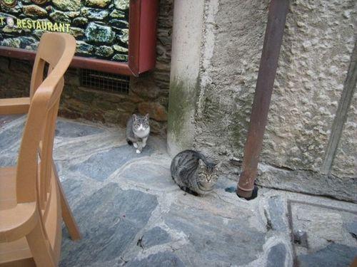Cats in Ordino