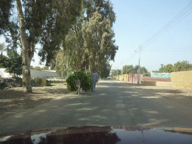 Road to Saqqara