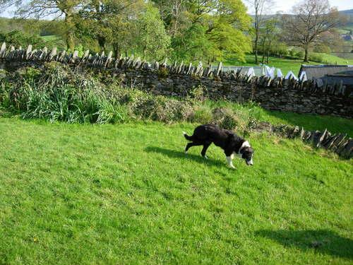 Lassie of Low Loanthwaite Farm