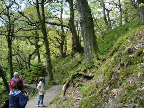 path to Aira Force