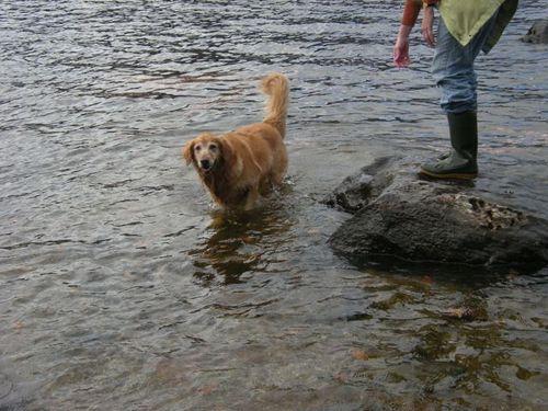 Really cool dog!