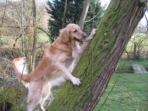 The Amazing Tree Climbing Dog
