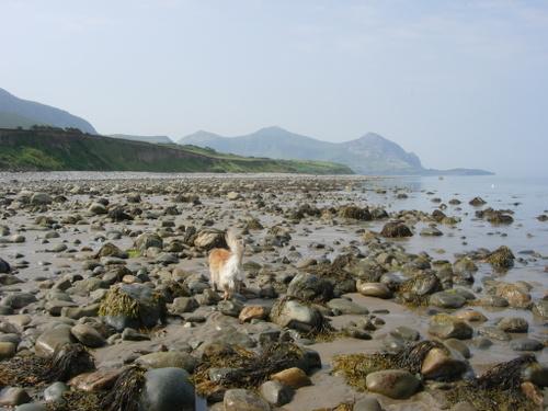 Bach Wen beach