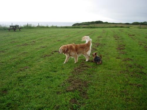 Bach Wen dog pasture