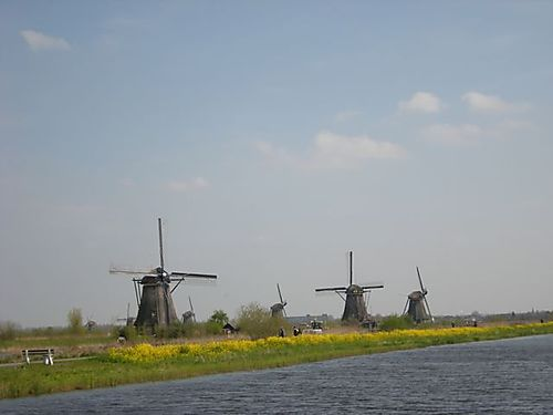 Flowers at Kinderdijk