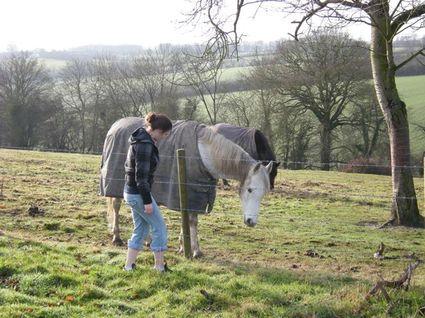 Friendlyhorse